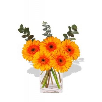 Small Gerbera Vase Bouquet